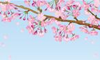 東京で桜を見ながらランチするならカナルカフェ?混雑回避の方法は?