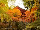 延暦寺観光に必要な時間は?比叡山紅葉の見ごろとおすすめ周辺スポット