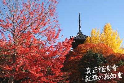sinnyodou-kouyou